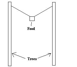 Hanging food between two trees
